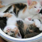 【ペット】猫の食事管理