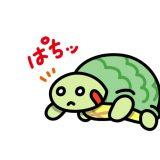 【亀】ミシシッピーアカミミガメが繁殖している場所